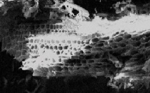 Enlargement of granular carbon shows countless pores that adsorb contaminants. The surface area of the pores is exceptional. A single pound of activated carbon has more surface area in its pores than 100 football fields. When the carbon is new, these pores are filled with air that must eventually work its way out.