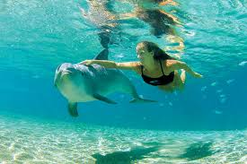 swimmingwithdolphins