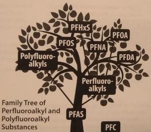 pfasfamilytree